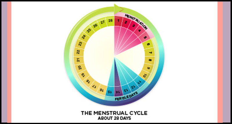 28 day menstrual cycle